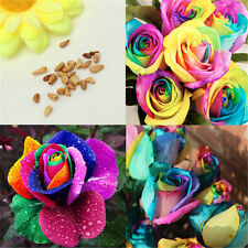 20Pcs Splendid Rare Rainbow Rose Flower Seeds Plant Home Garden sale