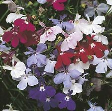 Lobelia Fountain - Mixed Nice Garden Flower 5,000 Seeds