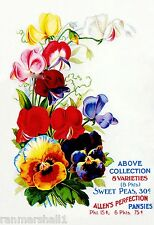 Allen's Pansies Vintage Flowers Seed Packet Catalogue Advertisement Poster