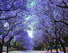 "Royal Empress Tree ""PAULOWNIA"" 200 Seeds Spectacular Purple Flowers in Spring"