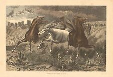 A Stampede Of Wild Horses, by W.M. Cary, Western Art, Vintage 1874 Antique Print