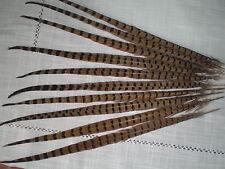 lot 10 grandes plumes faisan 50  cm