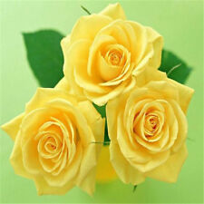 FD703 China Rare Yellow Rose Seed For Lover Yellow Rose Seed Fresh 10pc ✿