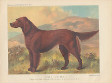 VINTAGE IRISH SETTER DOG IN MEADOW AT SUNSET ANTIQUE DOG LITHOGRAPH 1881