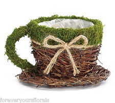 New Birch and Moss Tea Cup Container, Tea Cup Planter with Moss and Burlap Bow