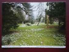 POSTCARD BUCKINGHAMSHIRE SNOWDROPS AT WEST WYCOMBE