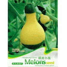 Lovely Cute Gourd Seed Vetable Seed ~1 Pack 10 Seeds~ Cute Gift A