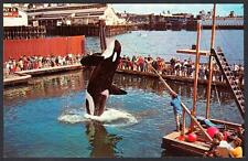 NAMU THE KILLER WHALE Seattle Public Aquarium Seattle Washington Postcard 3776