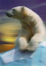 3 -D - Ansichtskarte: Eisbär - Polar Bear - Ursus maritimus