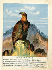 SEA EAGLE BIRD ANIMALS WILDLIFE ANTIQUE COLOR PRINT 1879