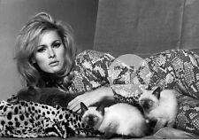 URSULA ANDRESS PUSSYCAT Chat Siamois Peau Serpent Féline SAM SHAW Photo 1965 #3