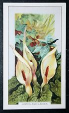 Lords And Ladies     Cuckoo Pint       Vintage Colour Card    VGC