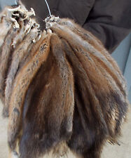 Large Tanned Prime Winter Muskrat pelt, hide, fur seller code: lgmichigansel