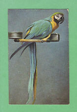 TUCK Beautiful MACAW parrot on his PERCH w/ FOOD & WATER BOWLS  a/s SCHONIAN