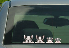Boston Terrier Family Stickers, Decals