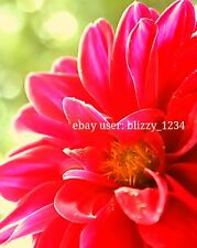Garden Red Flower/Digital Picture/Photo/Desktop Wallpaper/Image/Screensaver