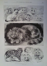 1896 PRINT PRIZE WINNERS AT THE NATIONAL CAT CLUB SHOW DRAWN BY LOUIS WAIN