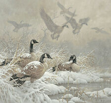 Larry Fanning Winter Retreat Bird Canada Goose Geese Print Poster 30x28