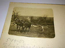 Antique Adorable Little Child In Field, Two Farm Cows! Real Photo Postcard RPPC