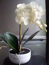 Artificielles en pot plante pivoine orchid