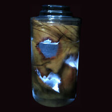 Lighted Human Face Head Severed Face in Lab Jar Halloween Party Prop + Mask