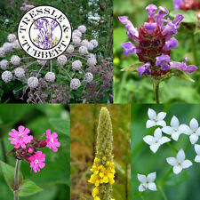 Rare WILDFLOWER MIX FOR SHADE,  Flowers - approx 150 seeds - UK SELLER