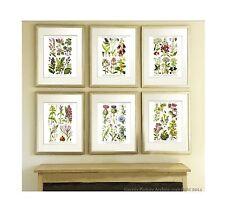 Antique Botanical Print set of 6 Wild Flowers English Cottage Decor Wall Hanging
