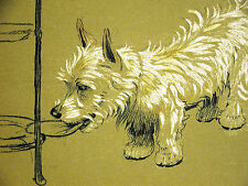 Cecil Aldin 1910 WEST HIGHLAND TERRIER Stealing Food From Tray Art Print Matted