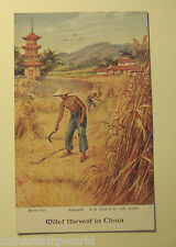 old China postcard,miller harvest in China, unused