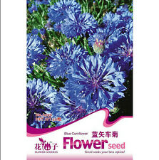 FD1279 Blue Cornflower Seed Centaurea Cyanus Garden Flower ~1 Pack 50 Seeds~ New