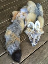 Kit Fox Pelt Fur Hide Tanned Log Cabin Decor coyote red grey rustic western cool