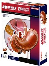 4D Master Visible Stomach & Organs Anatomy Model Kit Teaching Aid New