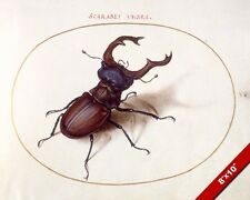 SCARAB BEETLE ILLUSTRATION INSECT BUG WATERCOLOR PAINTING ART REAL CANVAS PRINT