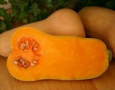 Watham Butternut Winter Squash 35 Seeds Sweet and Delicious Heirloom