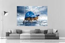 lustig schildkröte mit mütze Wand Kunst Plakat groß format A0 Druck