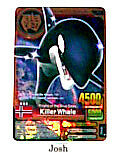 Animal Kaiser Evolution Evo Version Ver 7 Bronze Card (A045: Killer Whale)