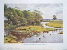 Dorset 1925 antiquario STAMPA-IL PONTE FROME da brockhampton, Walter Tyndale