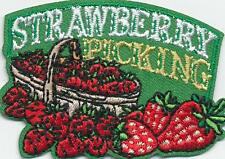 Girl Boy Cub STRAWBERRY PICKING Trip Day Fun Patches Crests Badges SCOUTS GUIDE