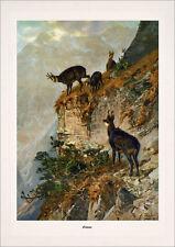 Imagen de caza rebeco cabra Gams Wild montaña cuernos facsímil 430 en papel de lino