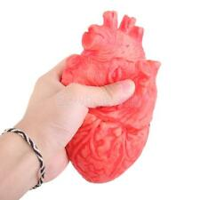 Scary Haunted House Bloody HUMAN HEART Organ Body Part Halloween Prop Decor
