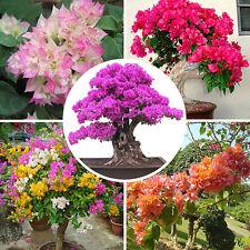 100pcs Mixed Color Bougainvillea Bonsai Flower Plant Seeds Home Garden Decor New