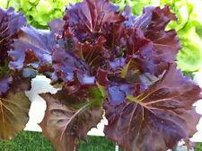 Red Cos Leaf Lettuce Seeds Veggie Salad seed