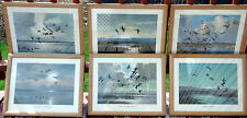 Complete Framed Set of 1952 Field and Stream Peter Scott Ducks Waterfowl Prints
