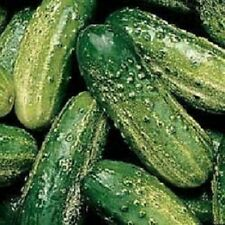 250 Wisconsin SMR 58 Pickling Cucumber Seeds
