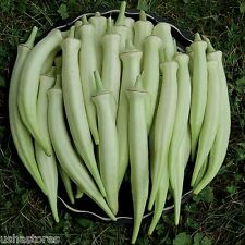 20 Seeds * Rare * Silver Queen Okra Ladies Finger bhindi Organic Heirloom Veg
