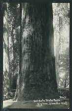 CA Del Norte State Park RPPC 1940's BIG TREE & CAR REDWOODS by Patterson No.800