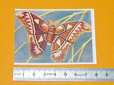 CHROMO BISCOTTES LUC 1952 PAPILLONS BUTTERFLY SATURNIE