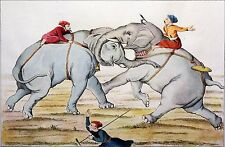 INDIA - BATTLE OF ELEPHANTS - Engraving from 19th century hand-painted
