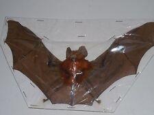 RHINOLOPHUS LEPIDUS SPREAD REAL BAT INDONESIAN TAXIDERMY