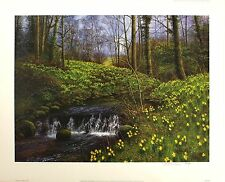 "Bill makinson ""Golden Beck"" narcisos Firmado Limited Ed Tamaño:56 cm X 70cm nueva"